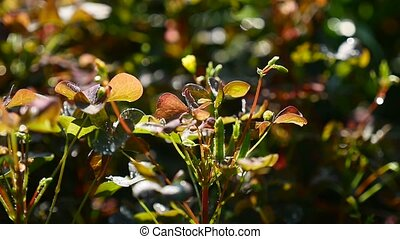 video plant with small leaves green - red - video plant with...