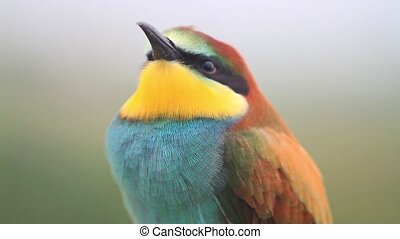 video portrait of a beautiful colored bird , wildlife and beautiful colors
