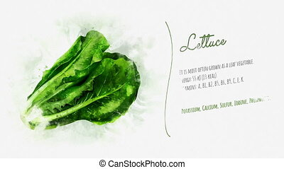 Video slide about the Lettuce and its beneficial properties...
