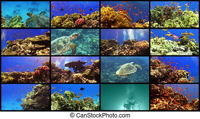 Video Wall Tropical Fish on Vibrant Coral Reef, 16 screens...