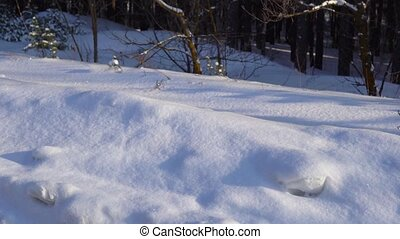 Videography winter forest from the window of a moving car or train. Camera moves past the trees, shrubs, pine trees covered with snow, snow drifts. Sometimes the sun breaks through the trees. Winter sunny cold day.