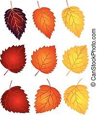 vidoeiro, folhas, em, cores baixa, ilustração