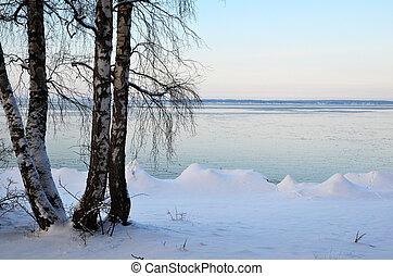 vidoeiros, inverno, costa