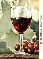 vidro, grupo, uvas vermelhas, vinho