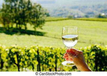 vidro vinho branco, exposto, direção, a, sol, vinhedo, experiência
