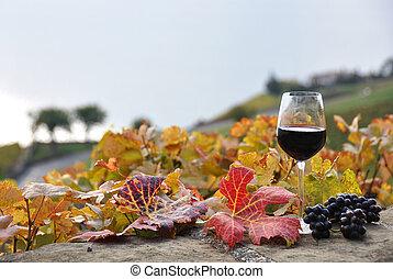 vidro vinho vermelho, ligado, a, terraço, vinhedo, em,...