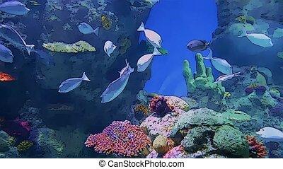 vie, aquarium, formulaire, dessin animé