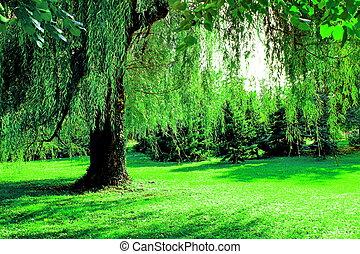 vie, arbre