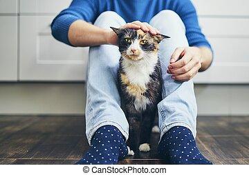 vie, chat domestique