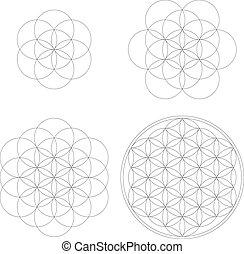 vie, ensemble, géométrie, shapes., conceptions, géométrique, development., vecteur, fleur, sacré, éléments