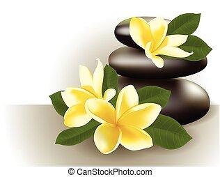 vie, fleur, illustration., frangipanier, vecteur, spa, encore