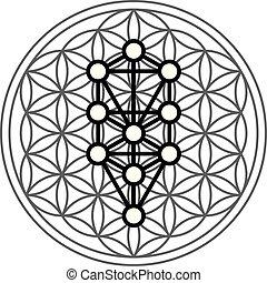 vie, judaïsme, juif, arbre, sephira, sephiroth, mondiale