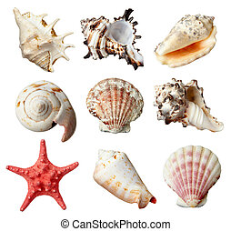 vie, marin, seashel, mer