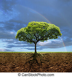vie, racines