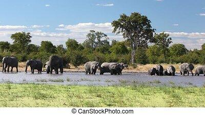 vie sauvage, éléphant, afrique, africaine, waterhole, safari