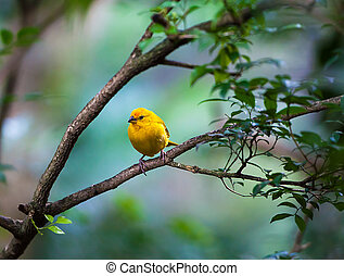 vie sauvage, branche, oiseau, jaune, séance