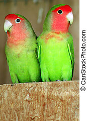 vie sauvage, -, photos, perroquet