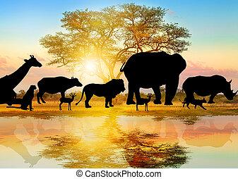 vie sauvage, silhouette, africaine