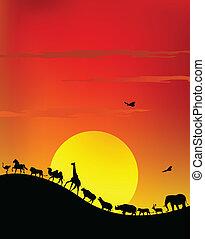 vie sauvage, silhouette, safari