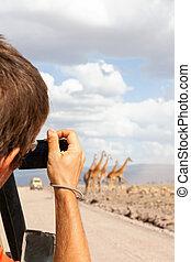 vie sauvage, touriste, parc national, serengeti, photographier