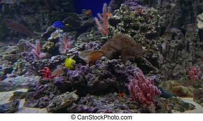 vie sous-marine, coloré, fish, récif, corail
