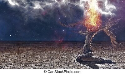 vieil arbre, aride, terre