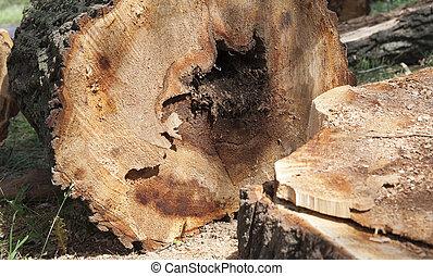 vieil arbre, coffre
