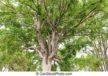 vieil arbre, dans, a, nature, forêt verte