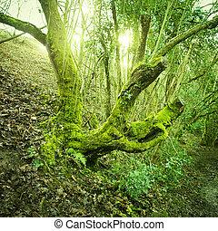 vieil arbre, vert, mousse