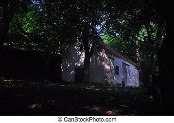 vieille église, dans, forêt