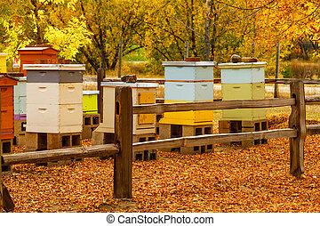 vieilli, bois, abeille, urticaire, dans, automne, monture