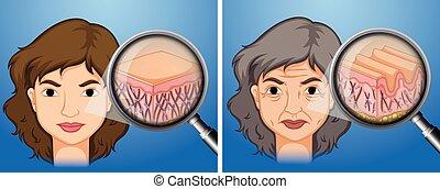vieillissement, plus jeune, femme, peau