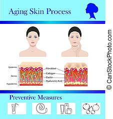 vieillissement, tipps, processus, illustration, vecteur, peau, préventif