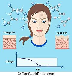 vieillissement, vieilli, processus, monde médical, faces, -, deux, jeune, vecteur, peau, illustrations, cosmetological, isolé, types