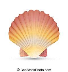 vieira, seashell, vector., realístico, vieiras, concha, isolado, branco, fundo, ilustração