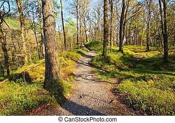 viejo, árboles, en, un, hermoso, bosque, en, primavera