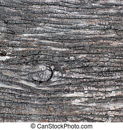 viejo, corteza, árbol