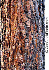 viejo, corteza, árbol, textura