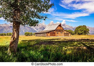 viejo, de madera, escénico, granja del árbol, grand teton, ...