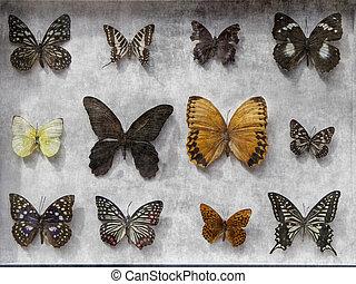 viejo, papel, texturas, con, mariposa