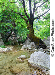 viejo, riachuelo, claro, árbol, agua, cristal