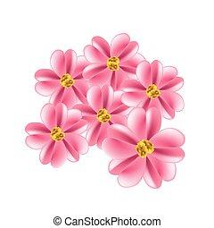 viejo, rosa, achillea, milenrama, millefolium, flores, o