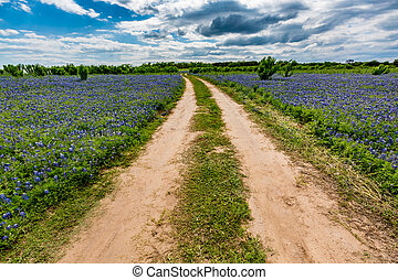 viejo, suciedad, campo, wildflowers, camino, bluebonnet,...