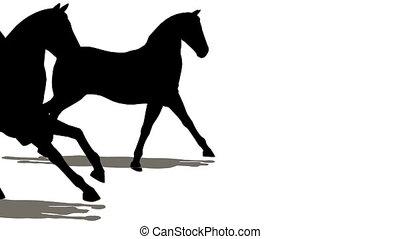 viele, pferden, silhouette
