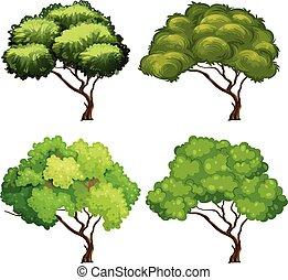 vier, arten, von, bäume