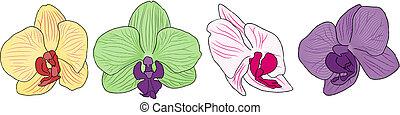 vier blumen, orchidee