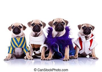 vier, geklede, mops, puppy, honden