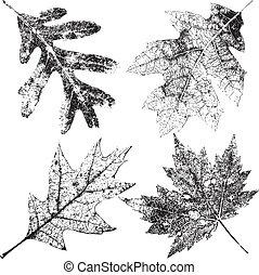 vier, grungy, bladeren, herfst