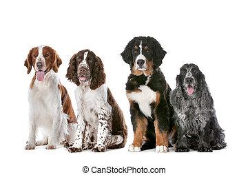 vier, hunden, reihe