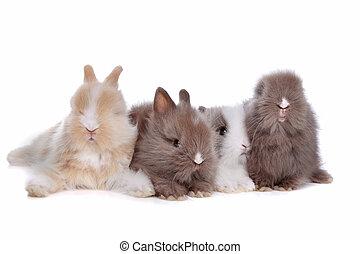 vier, junger, kaninchen, reihe